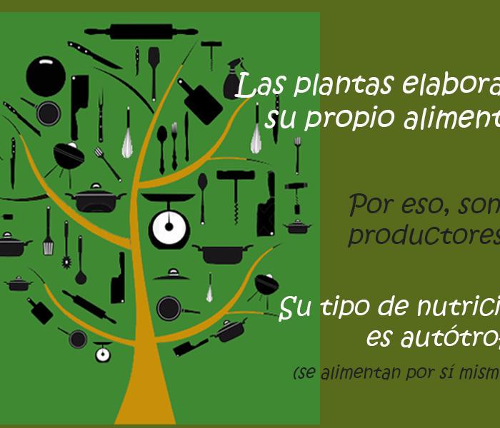 ¿Qué es la fotosíntesis?, un trabajo de INTA para los más chicos