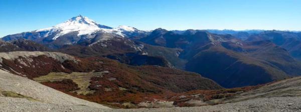 El calentamiento global podría impactar en los bosques de la Patagonia