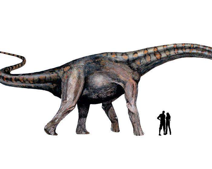 Distinguen un nuevo clado de dinosaurios gigantes