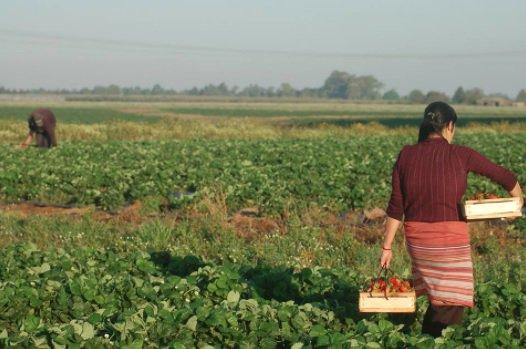 Desafíos rurales, agrícolas, alimentarios y ambientales de América Latina y el Caribe