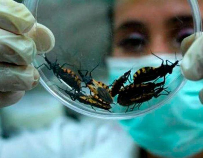 Chagas: Más de 1 millón y medio de argentinos están infectados