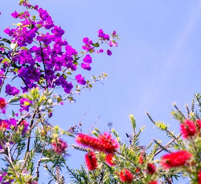 Astenia: llega el cansancio primaveral