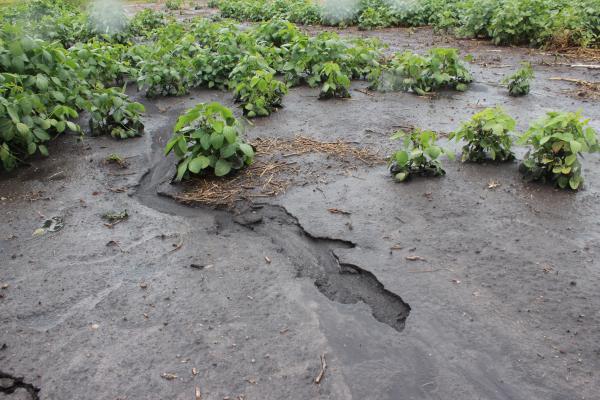 El 36% del suelo argentino sufre procesos de erosión, según estudio del INTA