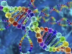 Primera base de datos representativa de la población argentina relativa a marcadores genéticos del cromosoma X