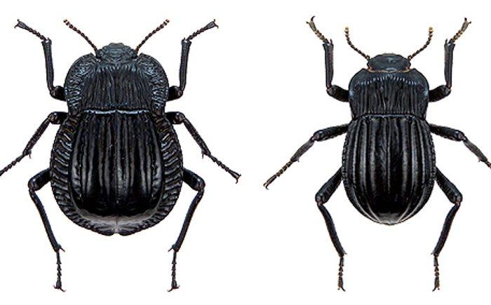 Los escarabajos como indicadores de servicios ecosistémicos