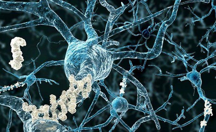 ¿Cómo las hormonas sexuales inducen cambios en la morfología neuronal?