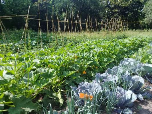 La huerta en verano: las claves para una abundante cosecha