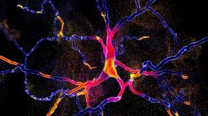 Estudian las señales eléctricas del cerebro como biomarcadores de Parkinson