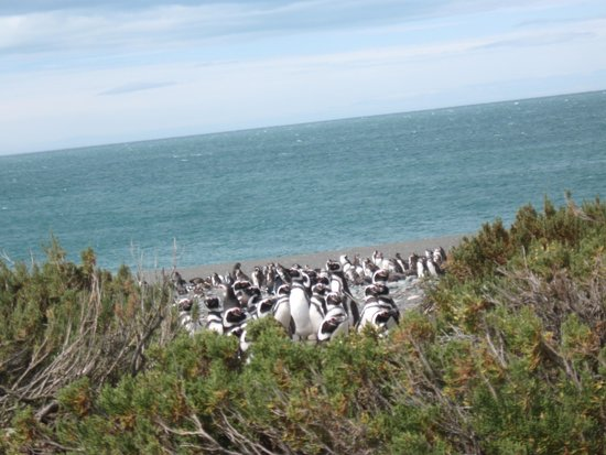 Santa Cruz inició acciones contra visitantes que se fotografiaron con pingüinos en Cabo Vírgenes