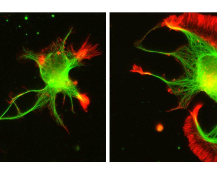 Desarrollan un método innovador para el campo de estudio de las proteínas