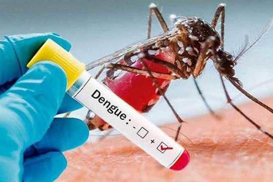 La Universidad de San Martín desarrolló método para detectar el dengue en 10 minutos