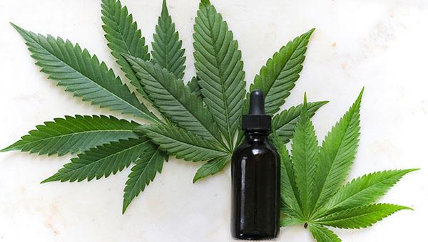 Multitudinaria reunión de la Red de Cannabis y sus usos medicinales del CONICET