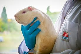 El trabajo del INTA para la protección de animales de laboratorio