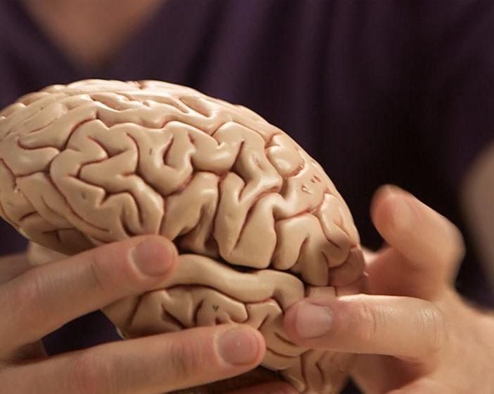 Investigadores españoles descubren cómo frenar el cáncer de cerebro más mortal