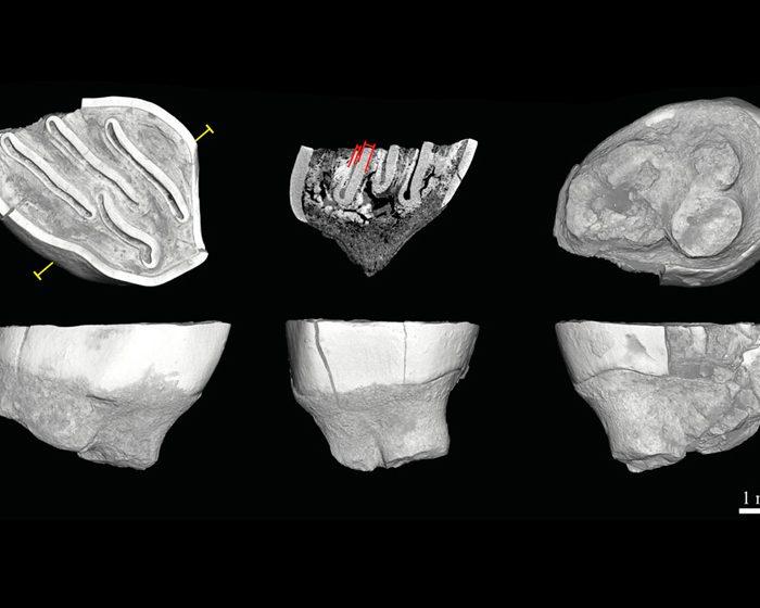 Revelan datos sobre los roedores más antiguos del Caribe