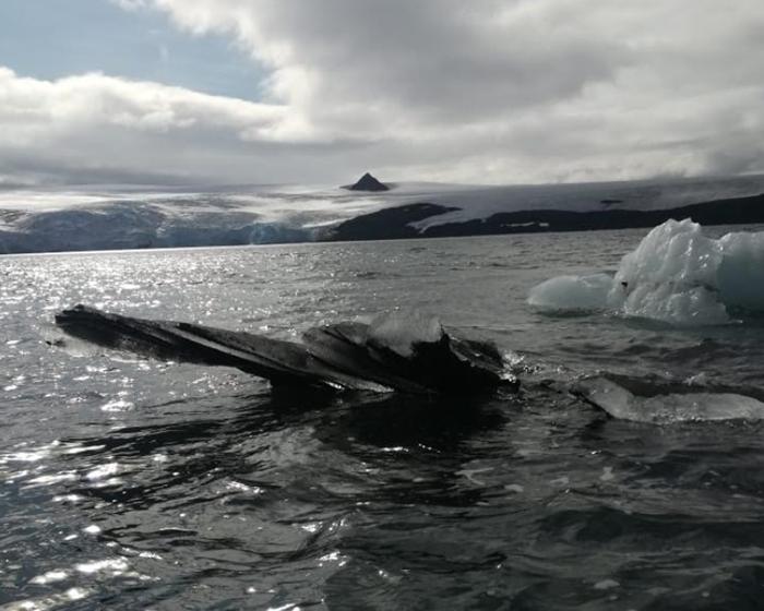 Encuentran toxinas en la Antártida por primera vez