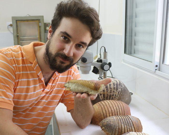 Hallan el primer fósil de pichiciego, el armadillo más pequeño del mundo