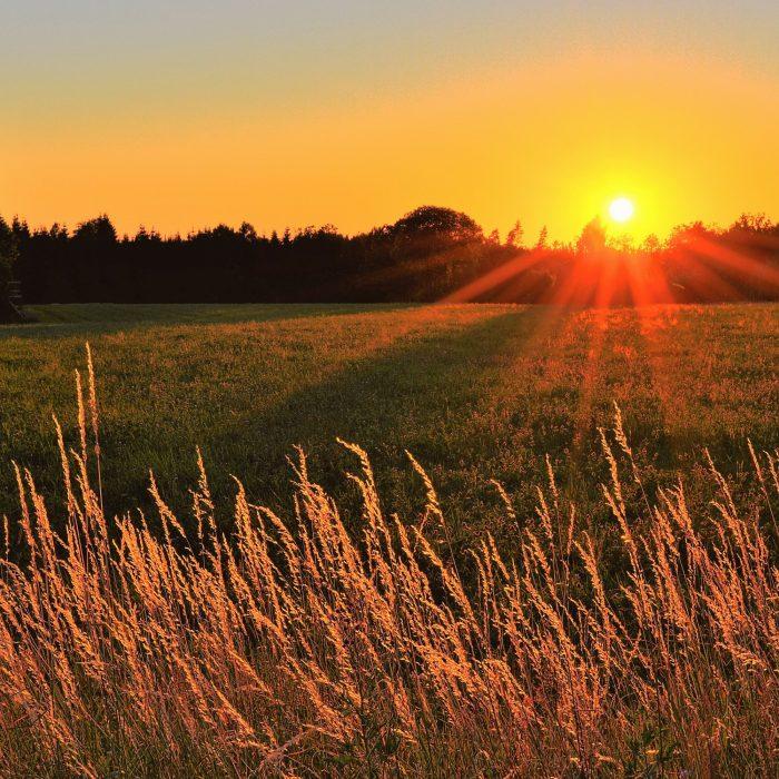 El presente y el futuro del agro, con claroscuros