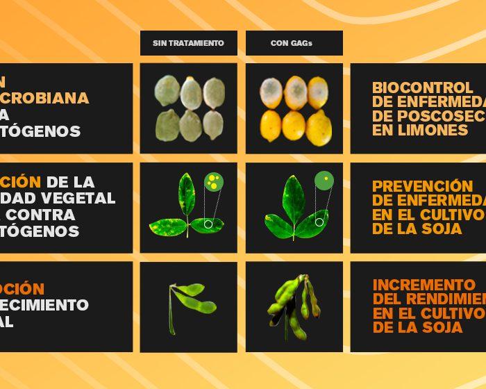 Identifican y purifican compuestos vegetales con importantes aplicaciones agronómicas y biotecnológicas