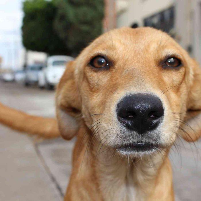 Colegio de Veterinarios advirtió peligro por Covid-19 a raíz de castraciones masivas de animales