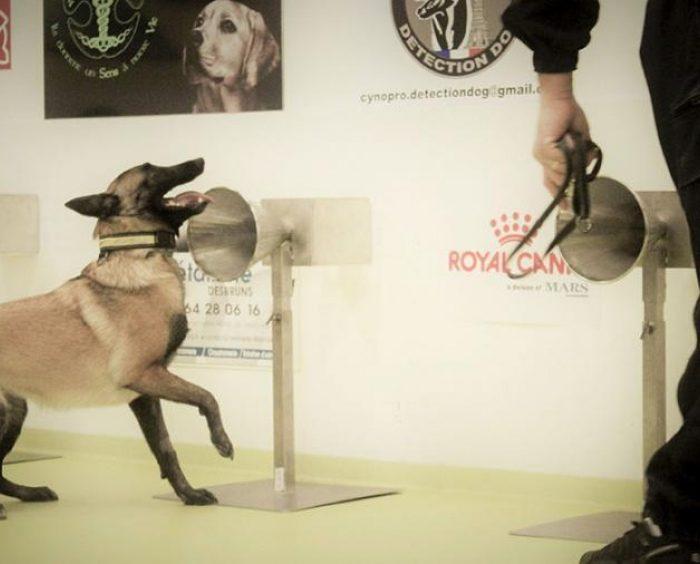 La UBA entrena perros para que detecten coronavirus a través del olfato