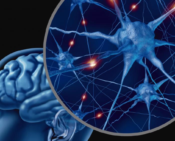 Epilepsia: un diagnóstico exacto es clave para poder controlarla