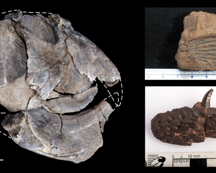 El análisis de cientos de fósiles revela una joya paleontológica de 230 millones de años