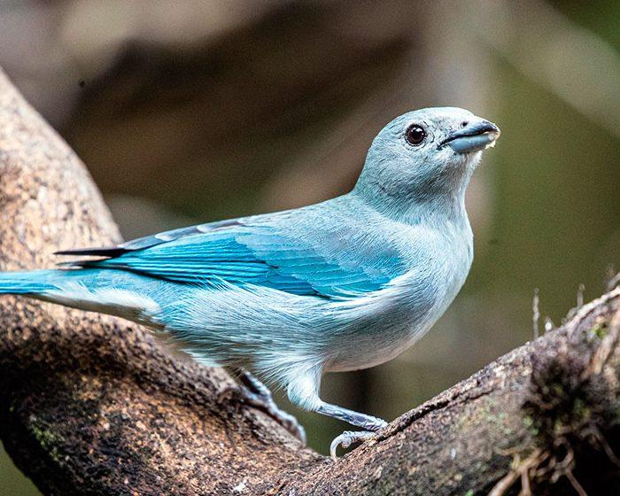 El río como barrera de especies: estudian la diferenciación genética en aves del Paraná y el Paraguay