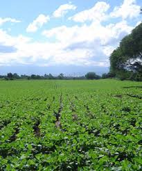 El riego por goteo revoluciona la producción tabacalera