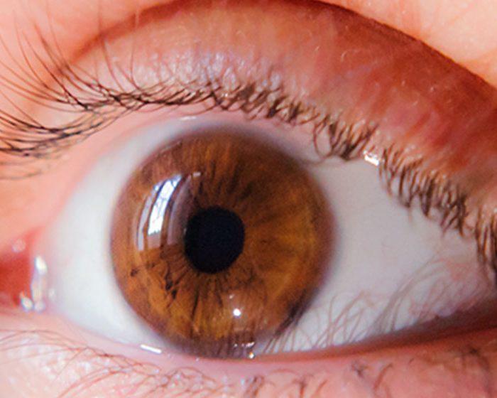 Identifican un circuito inmunomodulatorio clave en enfermedades vasculares de la retina