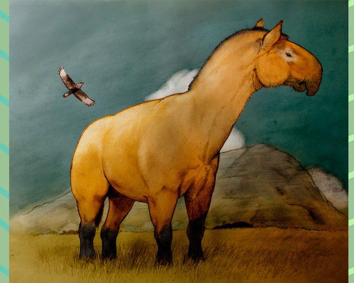 Investigadores del CONICET descubren ancestros de caballos, rinocerontes y tapires en Sudamérica