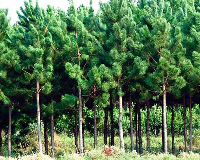 El valor de los bosques en términos ambientales, sociales y económicos