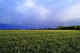 Productores de AAPRESID debaten cómo mejorar la sustentabilidad del suelo en su congreso anual