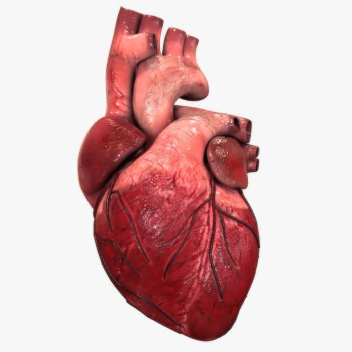 El atlas más completo del corazón humano desvela sus secretos más ocultos