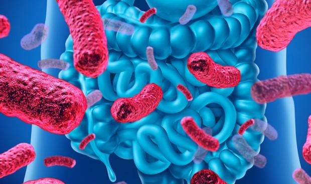 El microbioma intestinal protege frente a la predisposición genética a la leucemia