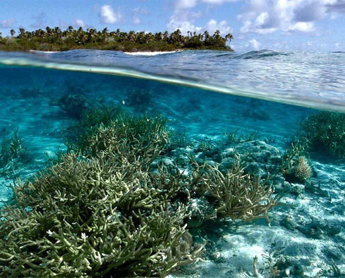 Un hallazgo científico ayudará a entender el impacto del cambio climático en el mar
