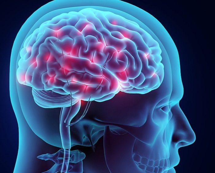Revelan mecanismos de la red de neuronas que regulan el sueño y la vigilia