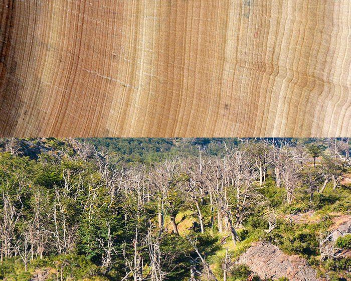 Los árboles crecen más rápido pero mueren antes a causa del calentamiento global