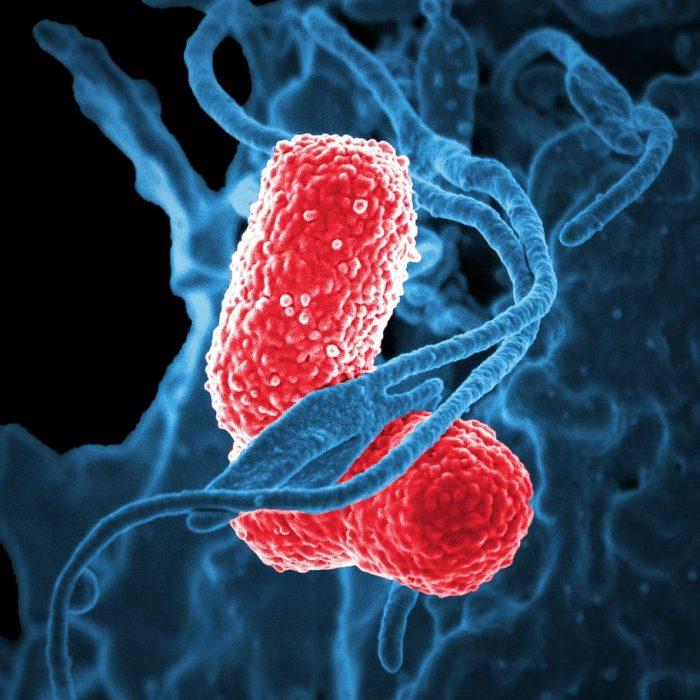 Desarrollan un clon infectivo del SARS-COV-2 para estudiar su biología molecular