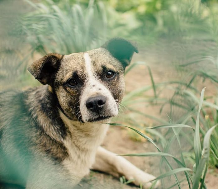 Testearon a un centenar de animales para saber si las mascotas se contagian con Covid