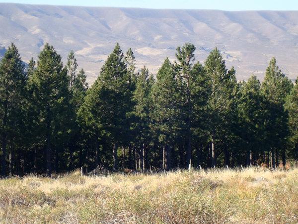 ¿Cuán efectivas son las forestaciones para mitigar el calentamiento global?