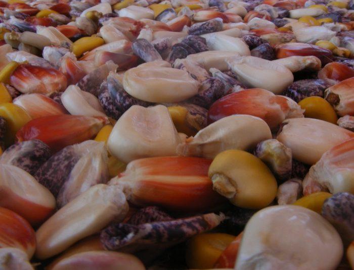 La importancia de conservar las variedades locales