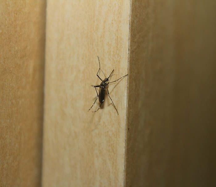 La OPS advierte sobre la aparición anticipada del dengue