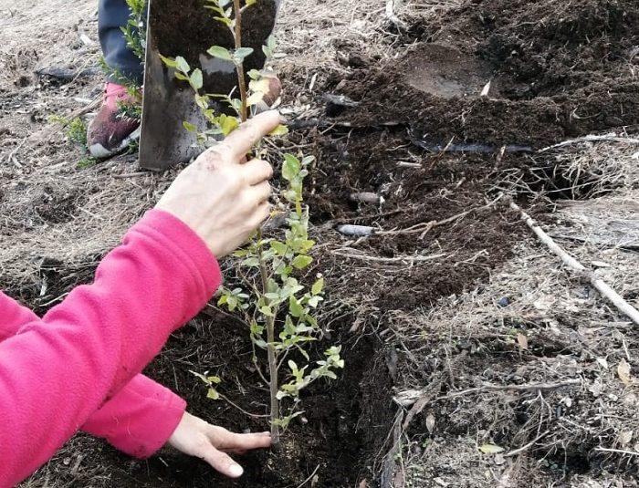 Restauran suelos y ambientes afectados por los incendios