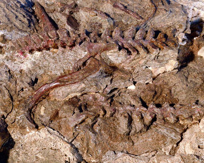 Develan uno de los misterios de la paleontología