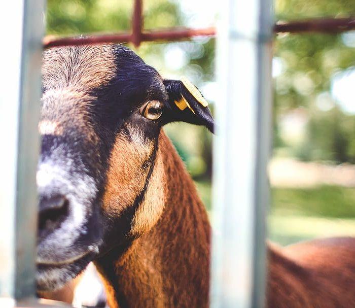 Aseguran que los animales pueden adquirir el coronavirus pero no lo transmiten a humanos