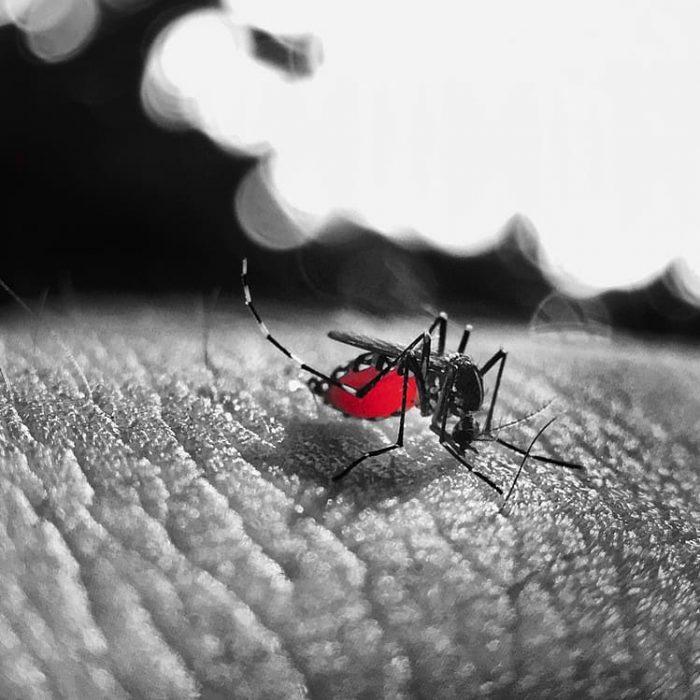Los argentinos se encuentra preocupado por el dengue, según encuesta