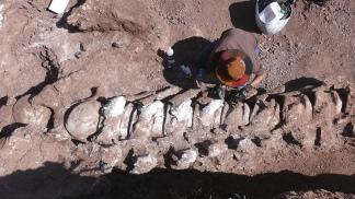Anuncian que el titanosaurio más antiguo fue descubierto en la Patagonia