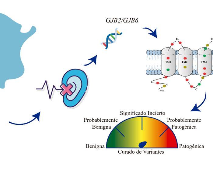 Científicas del CONICET realizaron un curado de variantes genéticas de los genes más frecuentes en la hipoacusia hereditaria