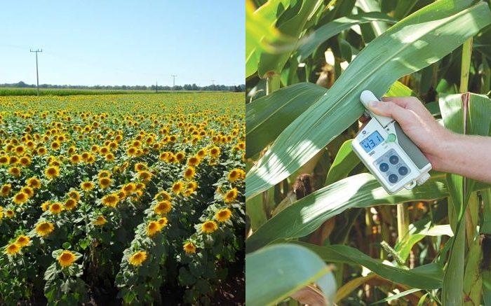 La investigación y la producción agrícolas tienen un vínculo asimétrico